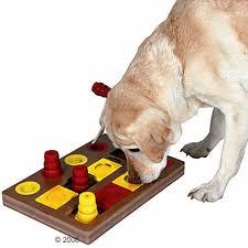 gioco e stimolazione del cane