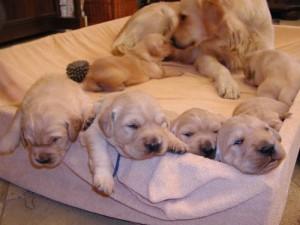 primi passi dei cuccioli