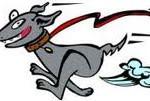 cane che scappa educatore cinofilo Francesco damico