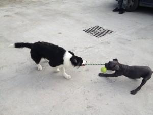 il gioco con i cuccioli