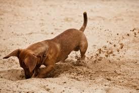 cane scava buche