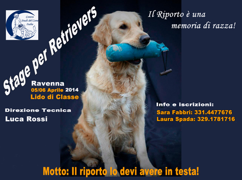 Stage_per_Retrievers_500