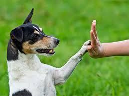 pensione per cani Barletta