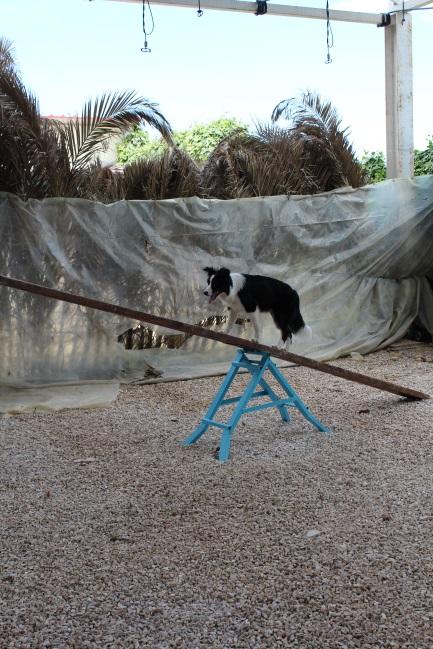 asilo per cani barletta