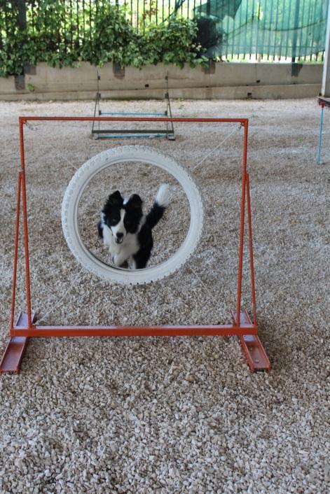 rifugio per cani barletta